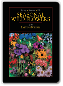 Seasonal Wildflowers